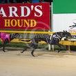 Race 8 Hay Billy