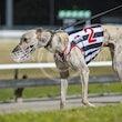 Race 10 Moscow Mule