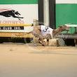 Race 10 Farmor Crownies