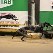 Albion Park 28 10 19 - Photos Taken By Toby Coutts