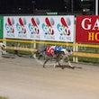 Race 8 Boscono
