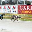 Race 5 Premier Gambler