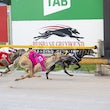 Albion Park 03 11 19 - Photos Taken By Toby Coutts