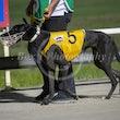 Race 9 Classy Zoro