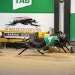 Race 10 Velocity Zarin