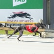 Albion Park 06 11 19 - Photos Taken By Toby Coutts