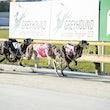 Race 7 Ricochet Radish