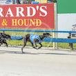 Race 4 Kingsbrae Raylen