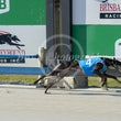 Race 3 Azure Gambler