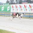 Race 1 Mcenroe