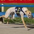 Race 9 (4) Sennachie