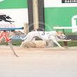 Race 5 Smart Cha Cha