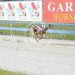 Race 6 Farmor Crownies