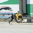 Albion Park 02 02 20 - Photos taken by David McInallu