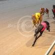 Race 7 Ringbark Ruby