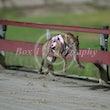 Race 4 Velocity Bettina