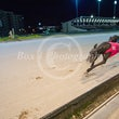 Race 5 Swift Dancer