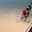 Race 11 Senor Dylan