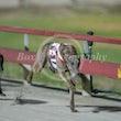 Race 11 Dervando
