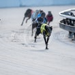 Race 1 Alpha Mania