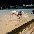 Race 3 Nikki Nettle