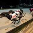 Race 4 Big Boy Bruce