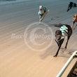 Race 7 Maywyn's Zephyr