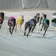 Race 8 Nan's Magic