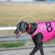 Race 6 Boscono