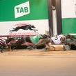 Race 10 Outback Mandrake