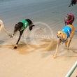 Race 2 Skye Diva