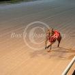 Race 3 Winning Light