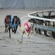 Race 7 Oski