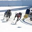 Race 1 Alpha Barron