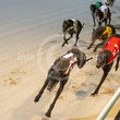 Albion Park 16 07 20 - Photos taken by Michael McInally & Toby Coutts
