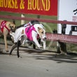 Albion Park 13 08 20 - Photos taken by Michael McInally & Toby Coutts