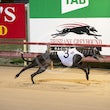 Albion Park 31 08 20 - Photos Taken By Toby Coutts