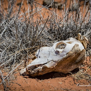 Alice Springs NT - The Outback - an amazing experience and a pleasure to visit and photograph