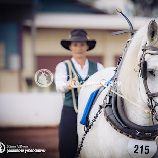 Gatton Heavy Horse  (Saturday) Harness / Ridden - PROOFS are now available for viewing ...................... HOW TO ORDER IMAGES - Select the image number/s...