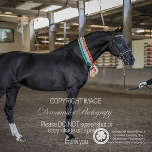 IDSHA Qld Breed Show 2019 (indoor) - Images will be  uploaded over the next few days (due to work commitments, images maybe purchased via email to Donna...