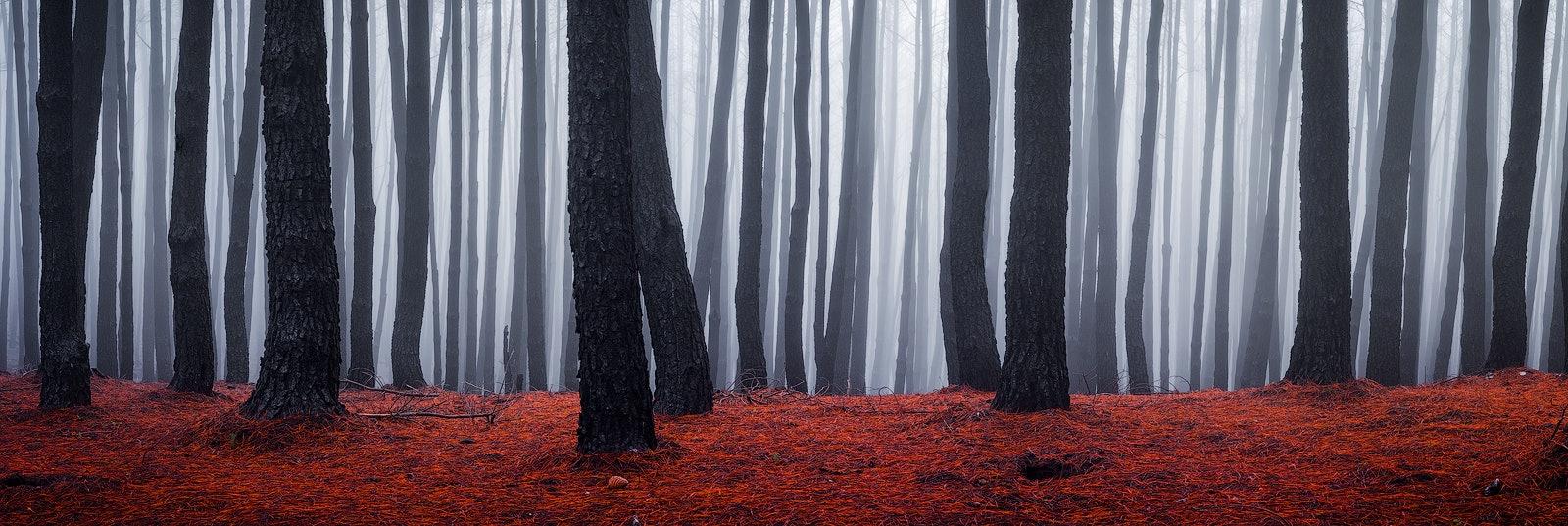 Outer Limits - Adelaide Hills, SA