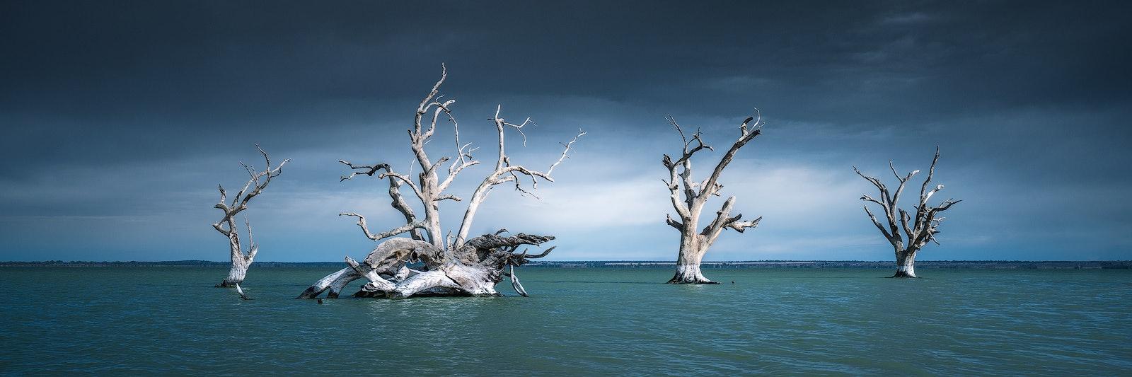 Bleak Outlook - Lake Bonney, SA