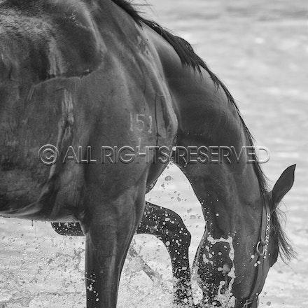 Warrnambool Beach, Amelie's Star_01-11-17, Sharon Lee Chapman_0033