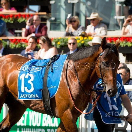 Race 6, Astoria_01-04-17, Royal Randwick, Sharon Lee Chapman_0151