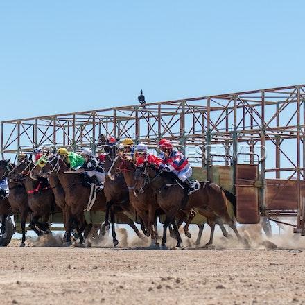 Betoota, Race 1, Starting Gate_25-08-18, Betoota, Sharon Lee Chapman_1116