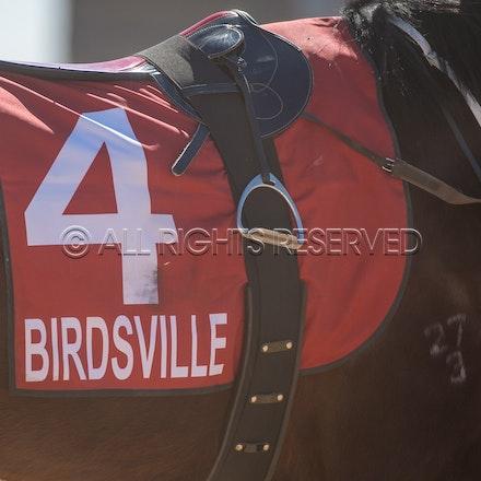 Birdsville, General, Saddlecloth_31-08-18, Sharon Lee Chapman_2516