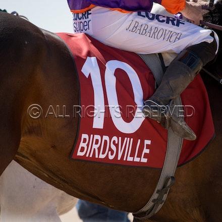 Birdsville, General, Saddlecloth_31-08-18, Sharon Lee Chapman_2517