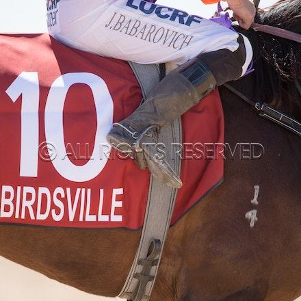 Birdsville, General, Saddlecloth_31-08-18, Sharon Lee Chapman_2519