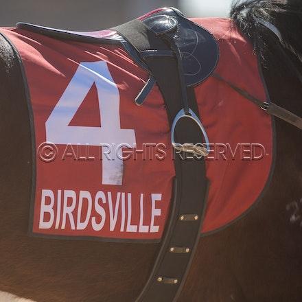 Birdsville, General, Saddlecloth_31-08-18, Sharon Lee Chapman_2623