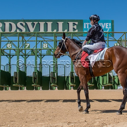 Birdsville Races - 31 August 2018
